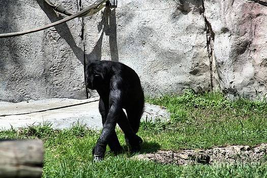 Strolling Monkey by Kelly Christiansen