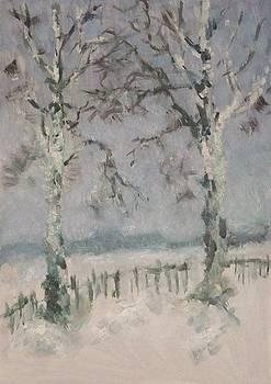 Study of birch trees  by Olga Suvorova