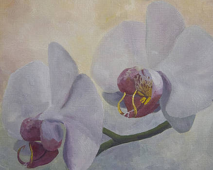 Study of Orchids by Aaron Acker