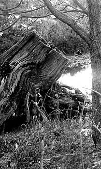 Stump  by Jaye Crist