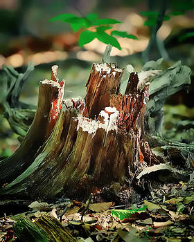 Stump by Michael Putnam