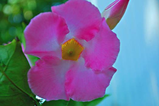 Michelle Cruz - Stunning Pink