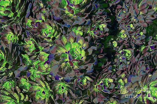 Afroditi Katsikis - Succulent GMO
