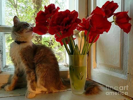 Summer - cat 1 by Alisa Tek