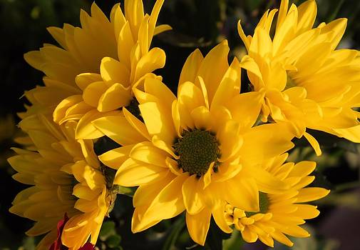 Lynnette Johns - Summer Blooms