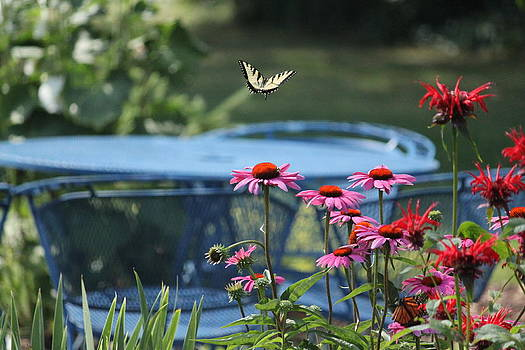 Summer Flight by Jody Neugebauer