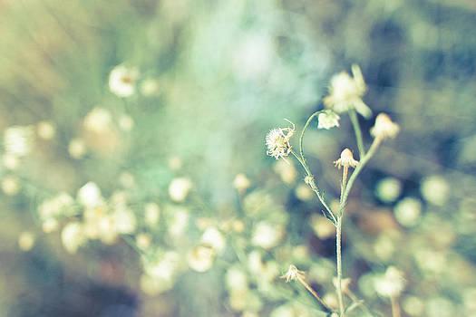 Summer flowers by Daniel Kulinski