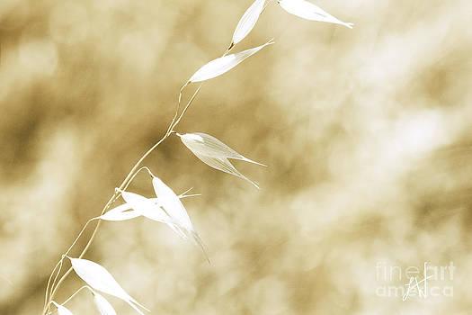 Artist and Photographer Laura Wrede - Summer Grass