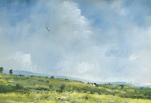 Summer hawk over Brading down by Alan Daysh