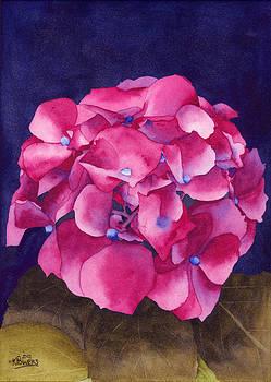 Ken Powers - Summer Hydrangea