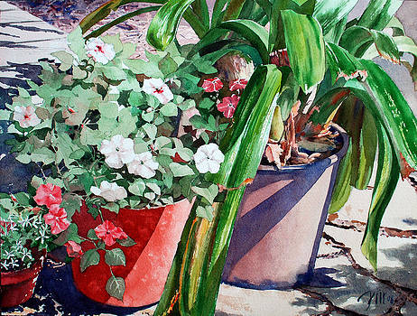Summer Impatiens by Peter Sit