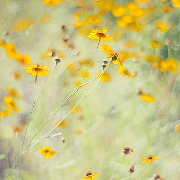 Summer Invitation by Joel Olives