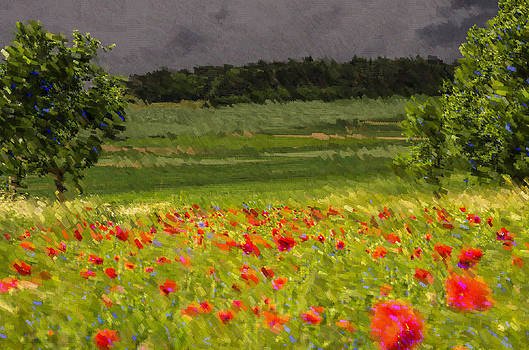 Summer meadow by Heiko Mahr