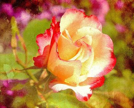 Summer Rose with texture by Cathie Tyler