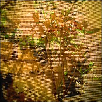 Summer Shadows by Gunnar Boehme