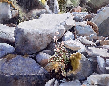 Sharon Freeman - Summer Streambed