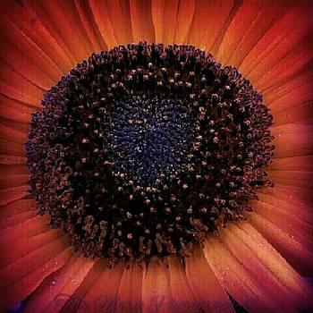 Summer Sunflower by Tina Marie