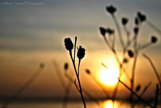 Summer sunset by Aliman  Samuel