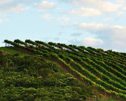 Summer Vineyards in Napa by Pamela Rose Hawken