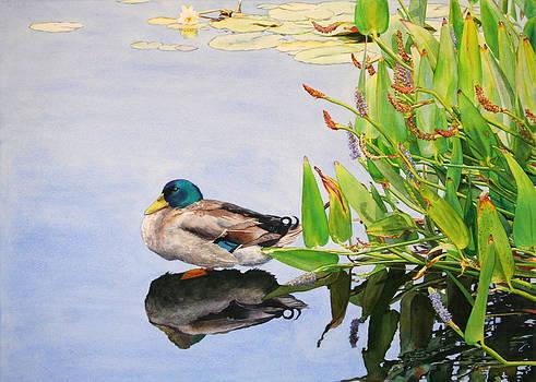 Summertime on the Pond by Kathleen Ballard