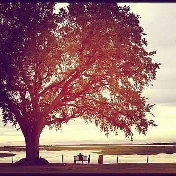Sun and nature love by Harman Kaur