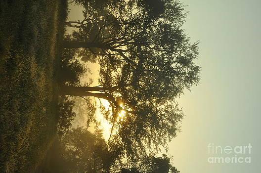 Sun And Tree by Andrea Pietroboni