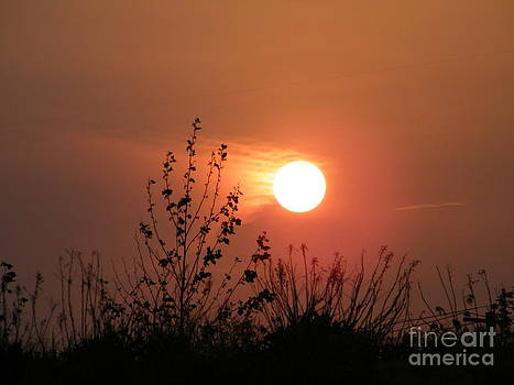 Sun Chase by Laurence Oliver
