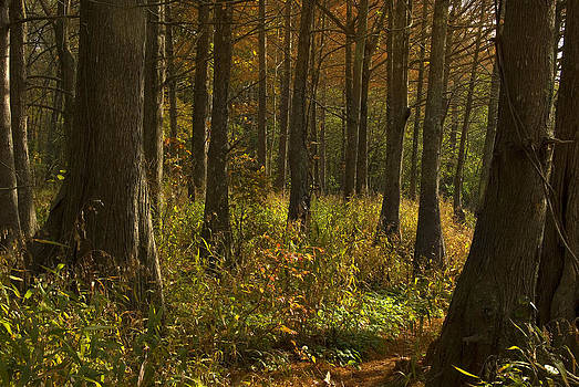 Sun Enters the Forest by Cindy Rubin