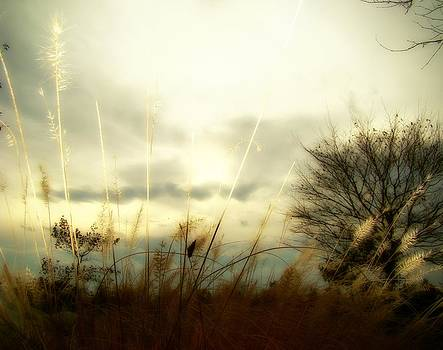 Gothicrow Images - Sun Fade