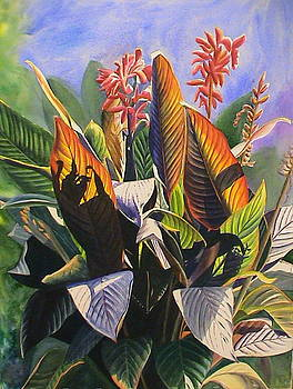 Sun Kissed Cannas by DJ Bates