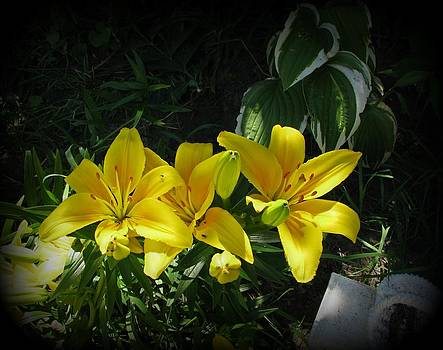 Sun Kissed Lilies by Victoria Sheldon
