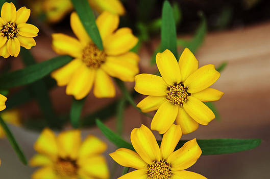 Sun Kissed Yellow by Lisa Moore