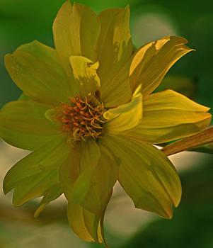 Michelle Cruz - Sun Lit Bloom