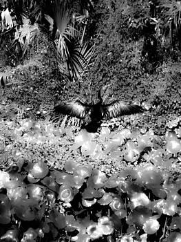 Christy Usilton - Sun on My Wings