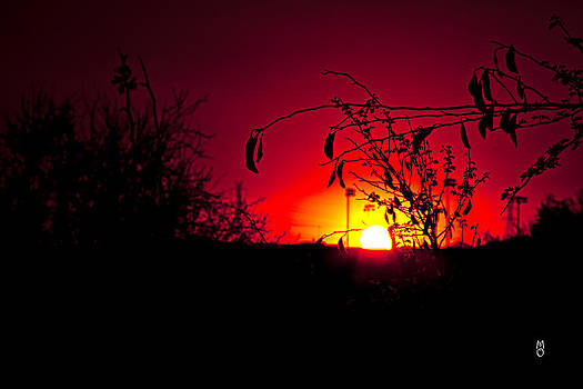 Sun plus Venus equal LOVE by Martin Osete