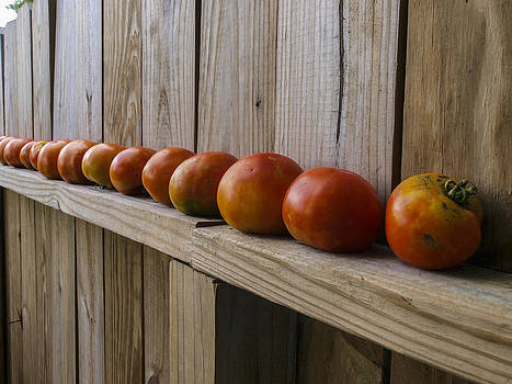 Sun Ripened Tomatoes by Ralph Brannan