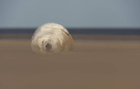 Sun Sea and Sand by Andy Astbury