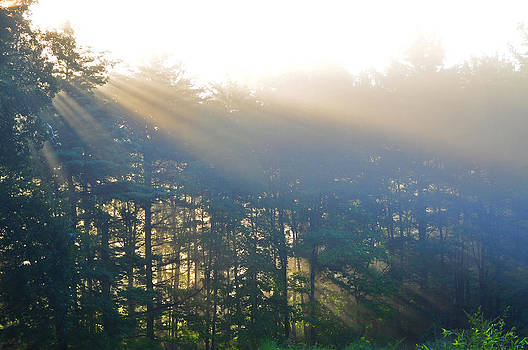 Sun Shower Through The Trees by Peter  McIntosh