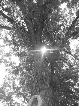 Sun through the tree by Mary Schriber