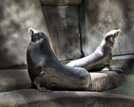 Mary Almond - Sunbathing Seals