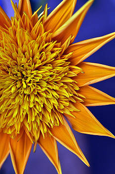 Sunburst by Sandy Fisher