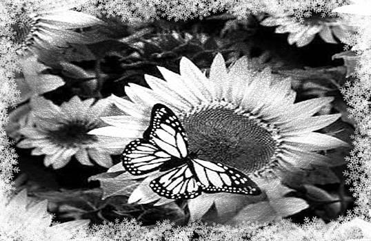 Debra  Miller - Sunflower Cream Monarch Butterfly