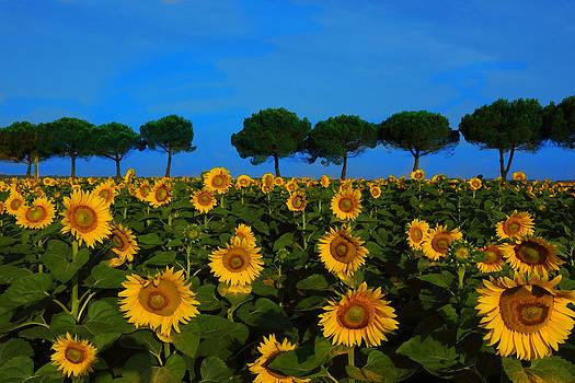 Susan Rovira - Sunflower Field