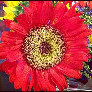 #sunflower #flower #floweroftheday by Shari Malin