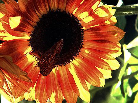Sunflower by Bill Hent