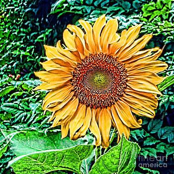 Anne Ferguson - Sunflower Portrait