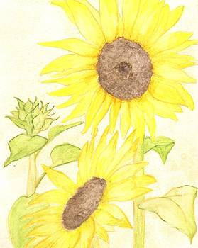 Sunflower by Sara Bell
