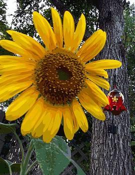 Sunflower by Scott Kelley