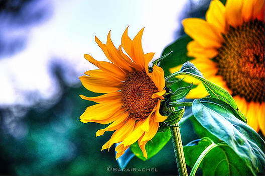 Sunflower Smile by Sarai Rachel