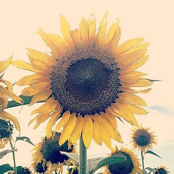 Sunflower State by Love Bird Photo